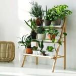 Какие комнатные растения купить