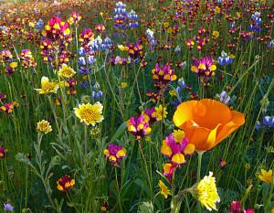 primety-o-pogode-cveti