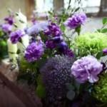 Комнатные растения, которые цветут круглый год