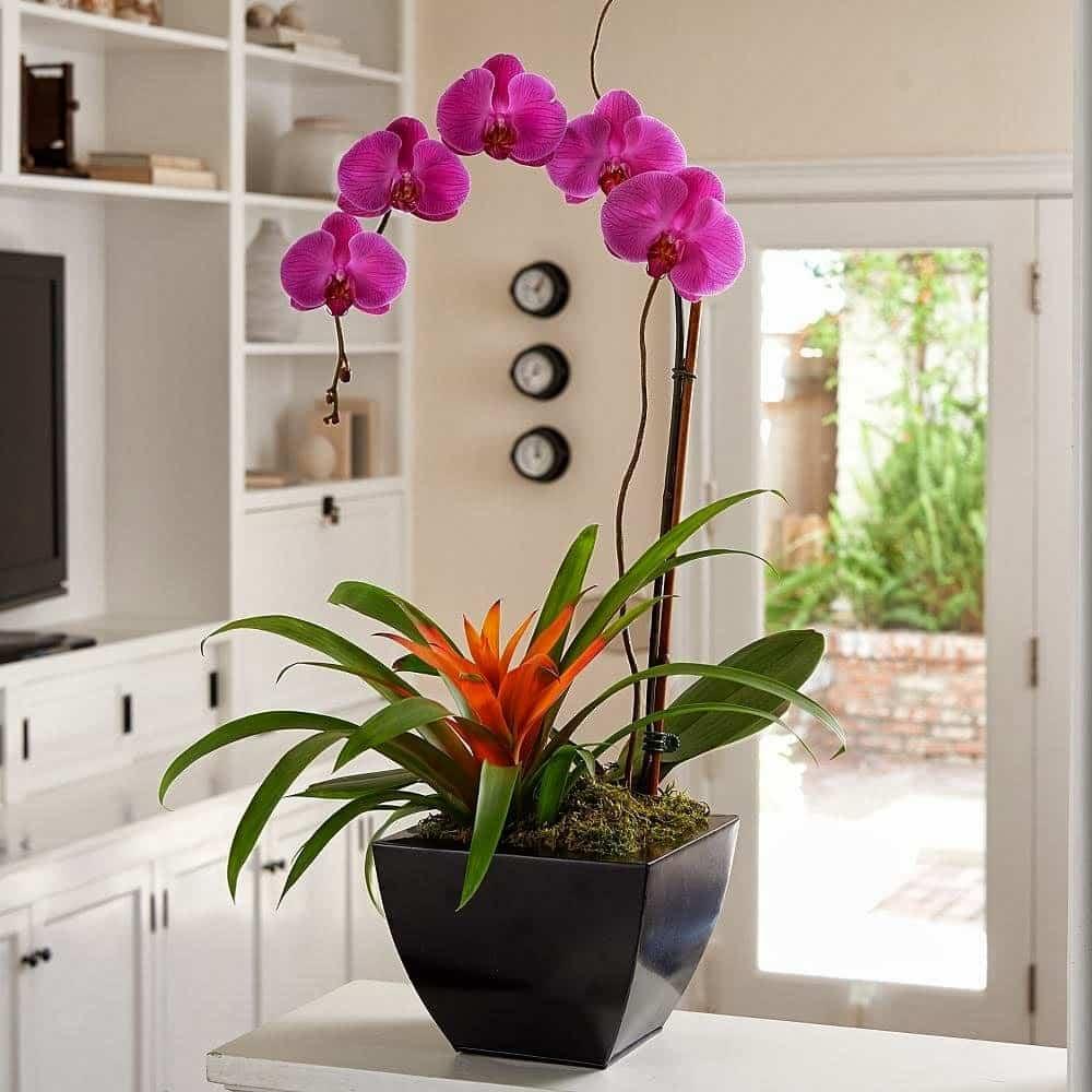 Комнатные растения  обереги по фэн шуй