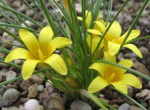 Однолетние цветы на даче названия и фото