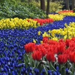 Самые раннецветущие цветы