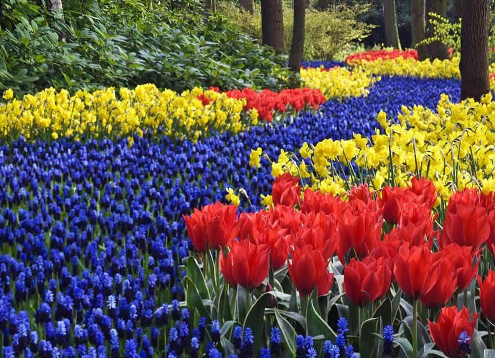 Цветы первоцветы