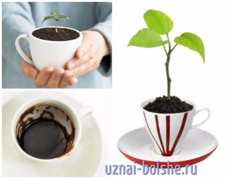 зола для комнатных растений можно
