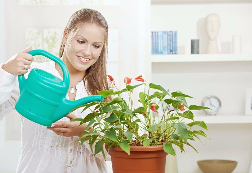 Чем удобрять комнатные растения