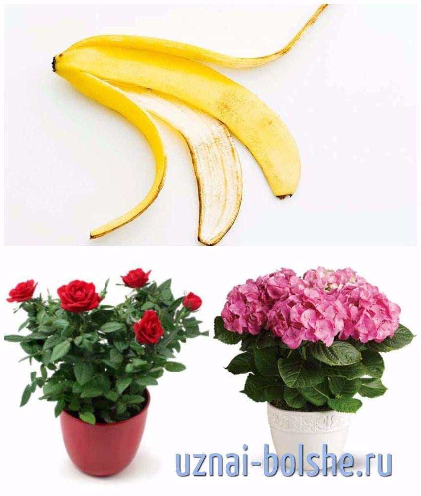 udobrjat'-komnatnye-cvety-bananovoj-kozhuroj