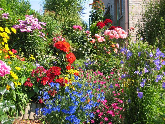 Какие однолетние цветы цветут все лето