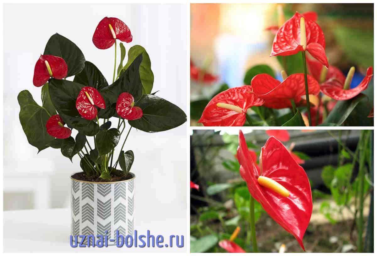 красивые девушки самые неприхотливые комнатные растения названия сайт