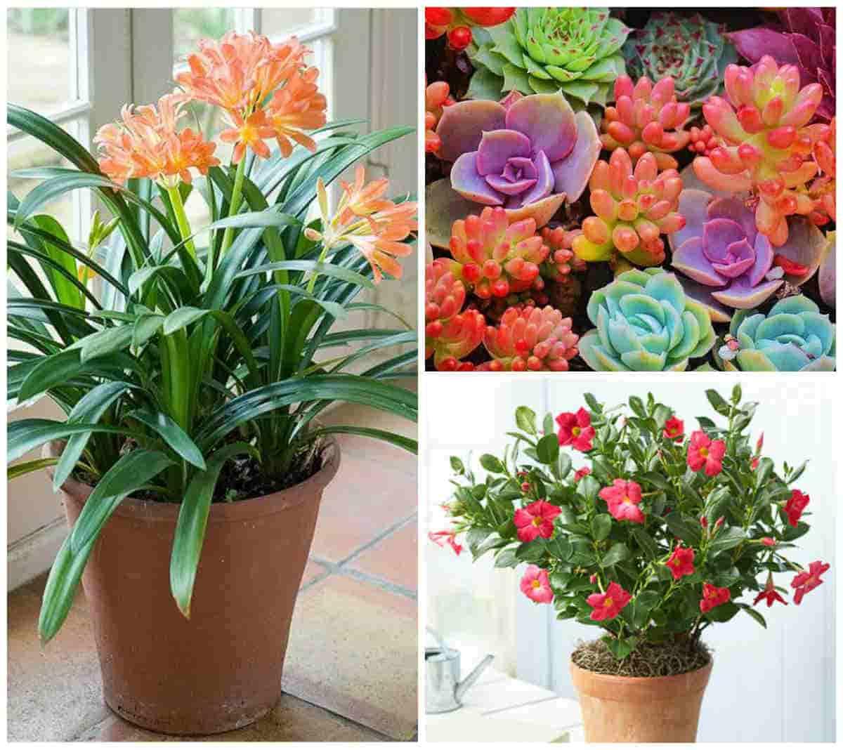 neprihotlivye-komnatnye-cvety-foto-i-nazvanija
