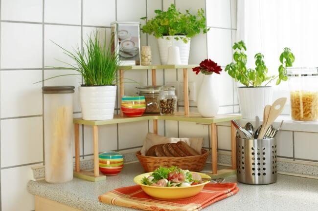 Комнатные цветы для кухни фото и названия