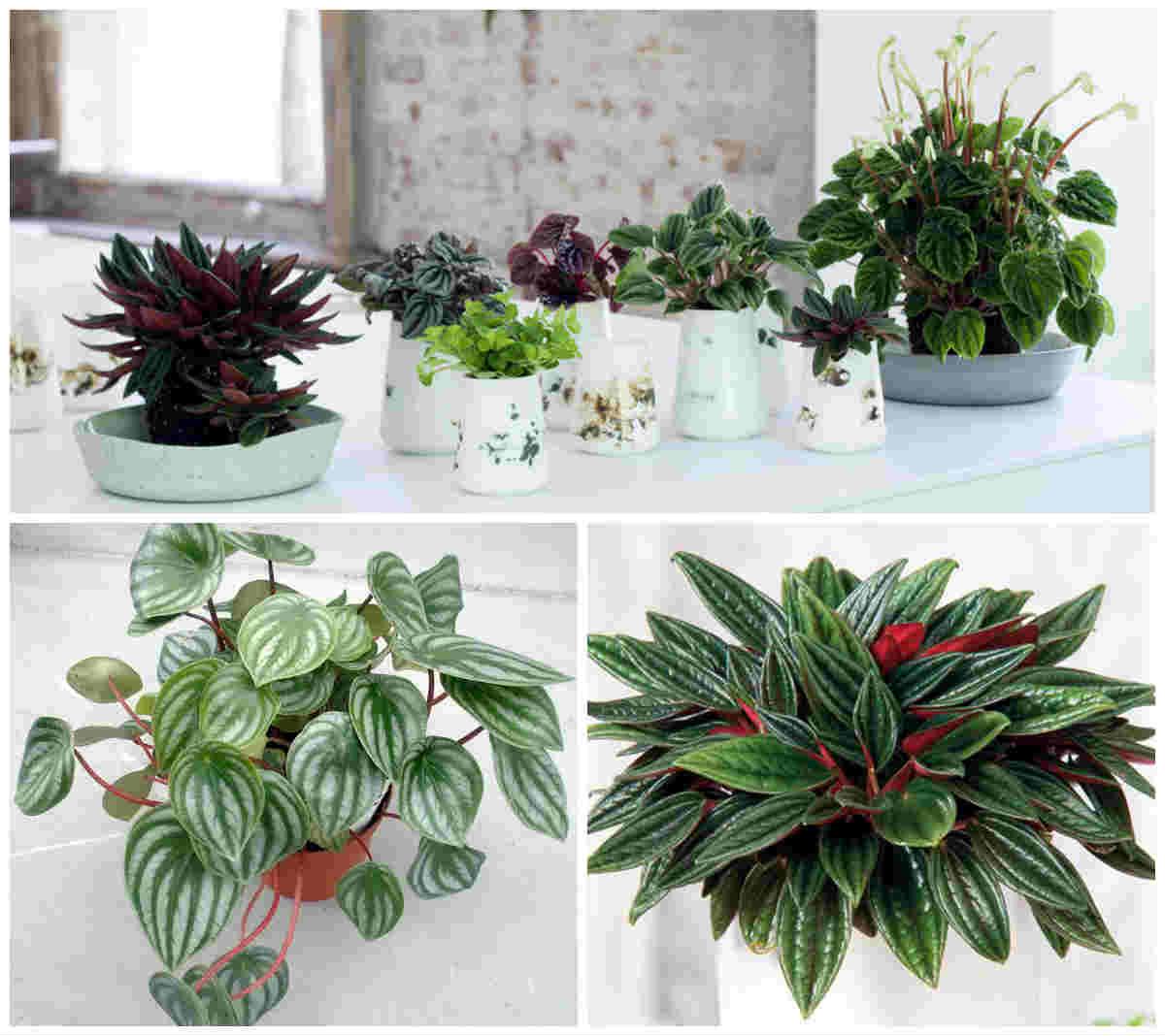 Комнатные цветы фото с названиями для кухни