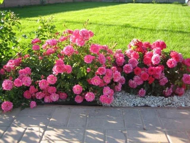Виды цветов фото и название для сада